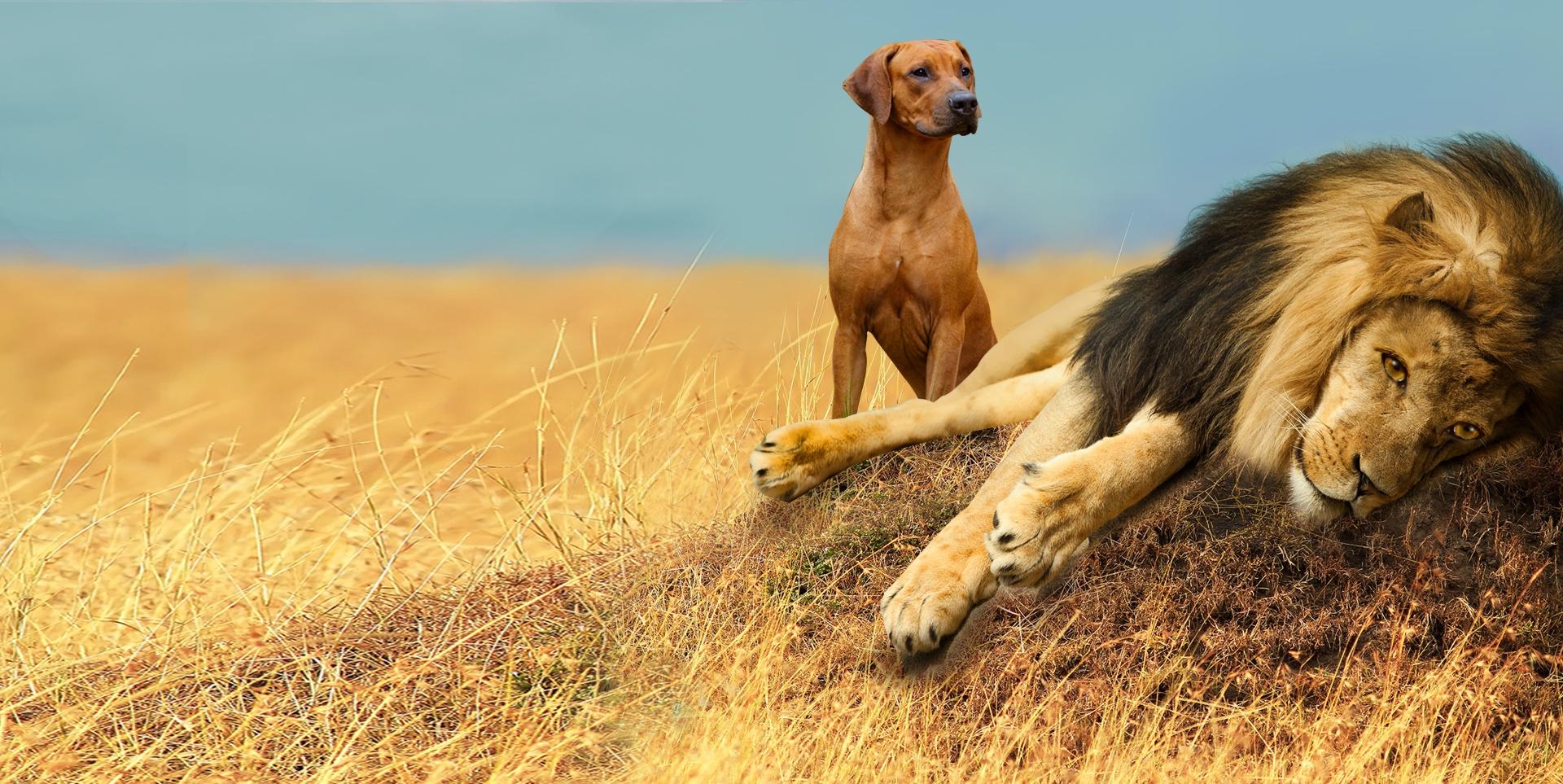 Gartner-Campaignpage_Lion_V2.jpg